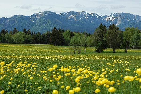 Frühling Gaißacher Filzen