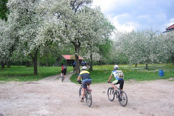Obstblüte im Frühjahr