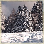 Aktuell - Winter-Wonder-Land