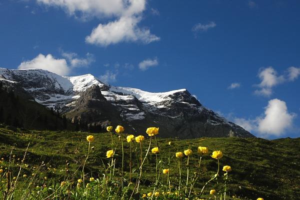 Frühling am Alpenrand