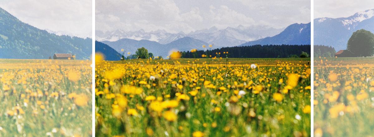 Frühsommer im Alpenhof